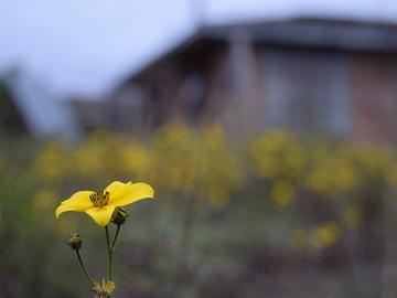 Rent: Nikon 3300 Digital SLR