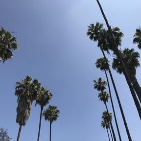 Cinonim LA