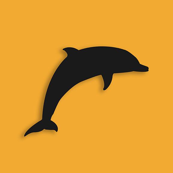 Black Dolphin Creative LLC